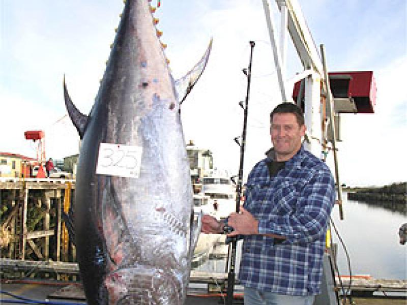 World record tuna